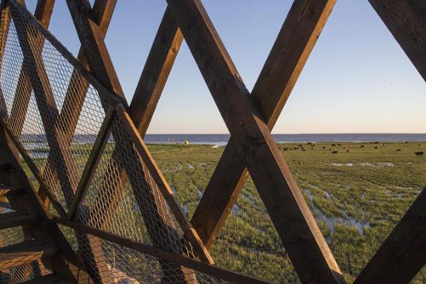 Pärnu rannaniidu vaatlustornid ja linnalehmad