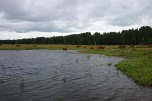 Aussichtstürme und Stadtkühe auf der Strandwiese von Pärnu