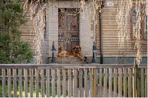Suppenstadt – eine milieuwerte Holzstadt, ein freundlicher Hund liegt auf der Treppe eines Holzhauses.