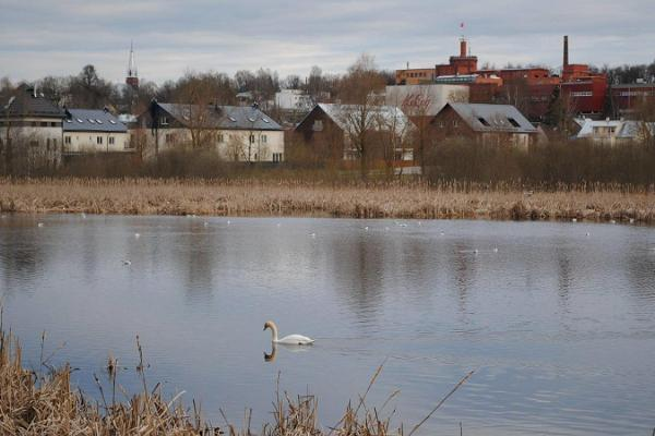 Supilinn – a district of wooden buildings with a wonderful milieu and a frog pond which is a nesting place for birds
