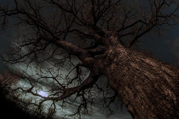 Городской квест «Темные тайны Гунгербурга»