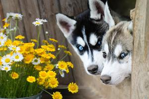Huskypark – a sled dog tourist farm welcomes you!