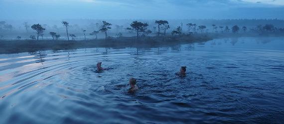 Swim, bog, sail in, water, lake, river