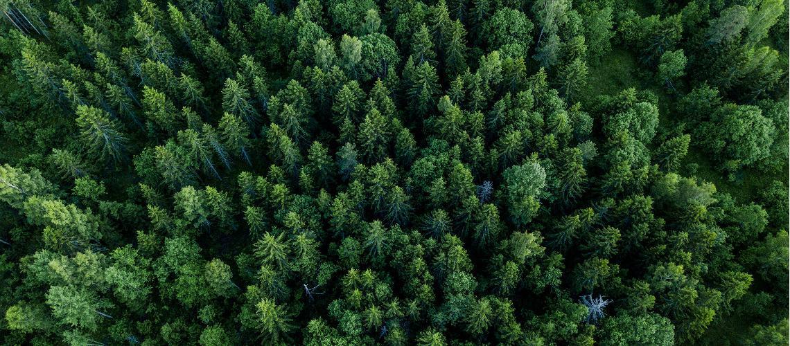 Hur kan naturen läka stress?