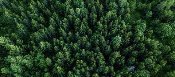 Wie heilt die Natur Stress?