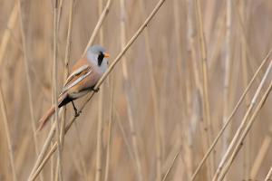 Однодневная поездка для наблюдения за птицами по Западной Эстонии