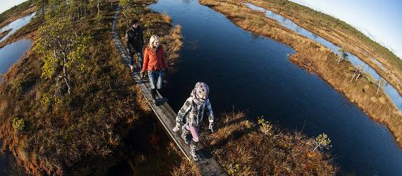 Hiking in Estonia, bog, wetland, visit Estonia
