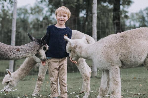 Alpaka-Farm Wile