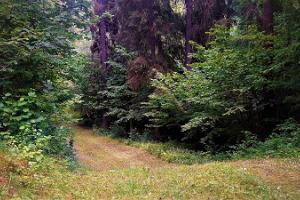 Hiking trails of Holstre-Polli Recreation Centre