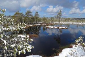 Tour im Hochmoor Viru