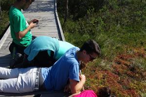 Hiking in Viru bog