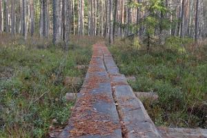 Naturlehrpfad im Urwald Järvselja