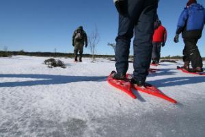 Seikle Vabaks snöskovandring i Lindi högmoss