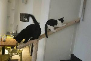 Cat Café Nurri