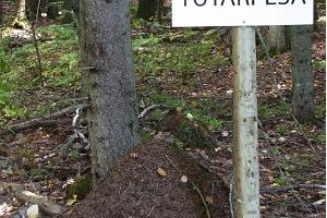 Padakõrve Hiking Trail