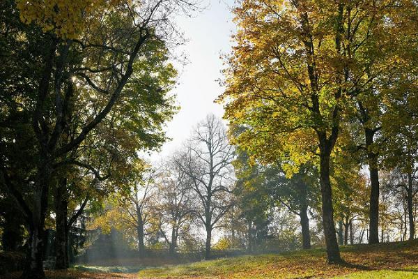 Rest spot in Rakvere oak grove