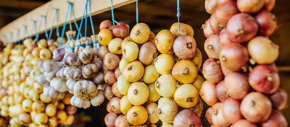 Onions on a farm in East Estonia, near the Russian border