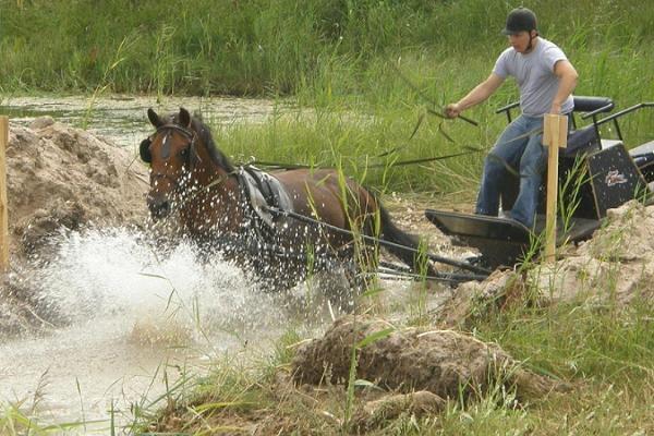 Pärna ratsatalu