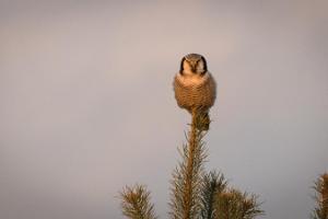 Vienas dienas putnu vērošanas ekskursija Tallinā un tās apkārtnē