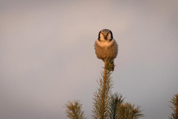 Eintägiger Vogelbeobachtungsausflug in Tallinn und Umgebung