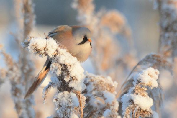 2-hours guided birdwatching walk in Haapsalu