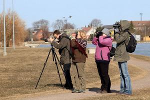 Guided birdwatching tour in Lääne County