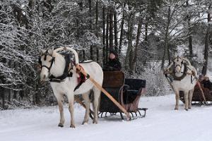 Pferdeschlitten-Fahrten des Voore-Stalls in Raplamaa oder bestellte Fahrten an Ihrem Heimatort