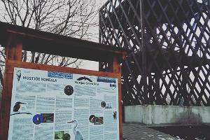 Vogelbeobachtungsturm Mustjõe