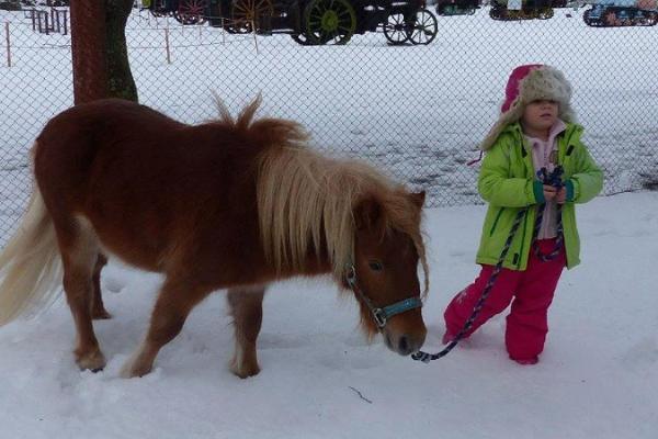 Пони Эстонского музея сельского хозяйства и маленькая девочка проводят время на снегу.