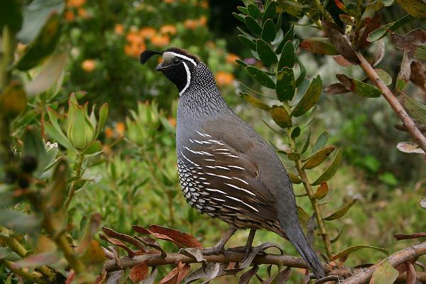 Küti-Uuetoa bird farm