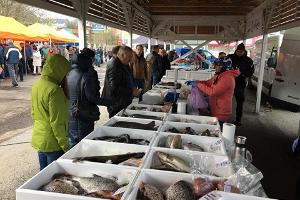 Fisktorget i Tallinn