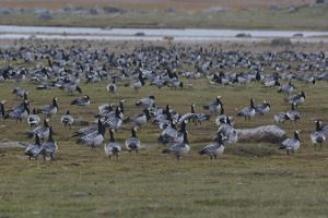 Fågel- och djurskådning i Matsalu nationalpark tillsammans med guide