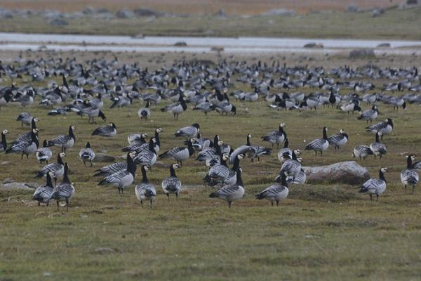 Bird and wildlife watching in Matsalu National Park with a guide