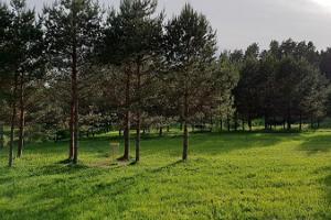 Tõrva discgolfi park