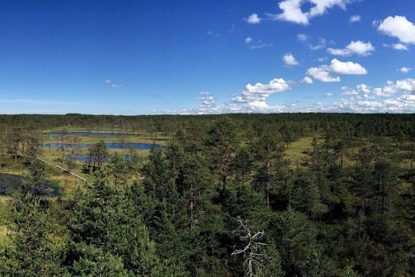 Endags biltur från Tartu för att upptäcka Lahemaa nationalpark