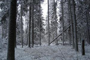 Ilvesemägi: a bog hike on elven trails