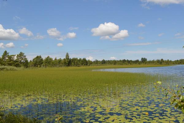 Looduse tuur Avasta Saaremaa omal käel