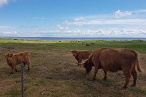 Unterbringung auf dem Risti Bauernhof auf der Insel Kihnu