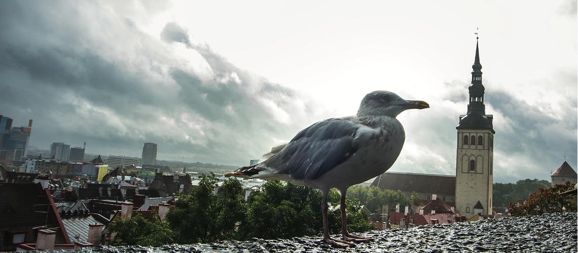 Möt Steven, Tallinnturisternas Instagramvän nummer 1