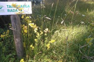 Oandun kasvituntijan polku
