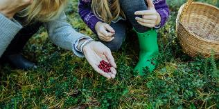 Berry picking tips in Estonia