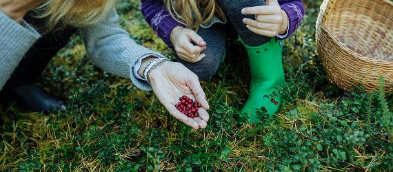 Berry picking tips in Estonia