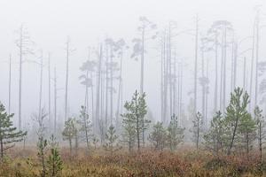Seikle Vabaks räätsamatk Soomaa Rahvuspargis asuvasse Toonoja rabasaarele