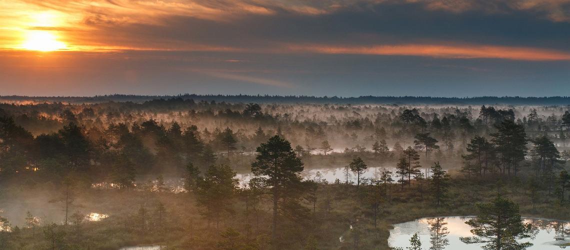 Hiking in Estonia