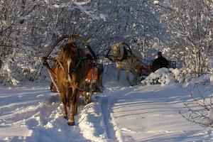 Tihuse hästturistgård