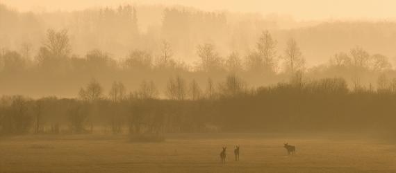 Matsalu rahvuspark. Udune luht põtradega. Visit Estonia