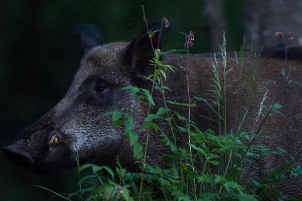 Dzīvnieku vērošana Kervemā kopā ar pieredzējušu pavadoni