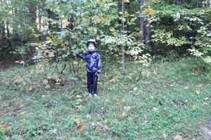 Apteekrimäe forest track