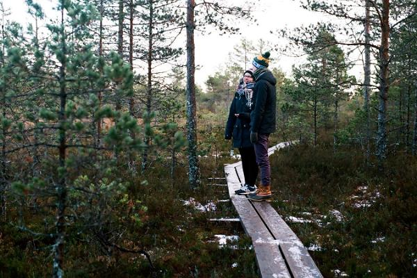 Дневная поездка из Таллинна: поход по болоту и посещение эстонской бани