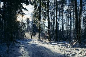 Voore tallide elamusterohke saanisõit Varbola linnuse muinasjutulises metsas
